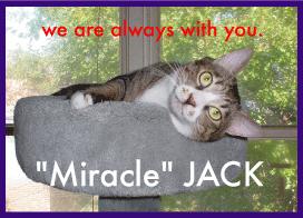miraclejack.jpg
